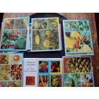 Набор открыток по флоре приамурской тайги. 1979 год издания.36 открыток.