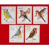 ГДР. Птицы. ( 5 марок ) 1979 года.