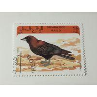 Сахара 1993. Хищные птицы