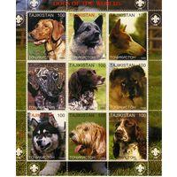 Таджикистан 1999г, собаки, 9м. сцепка
