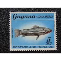 Гайана 1968 г. Рыбы.