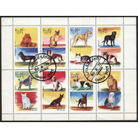 М.л. фауна. Оман. 1972. Собаки, кошки. Зуб.  Гаш.