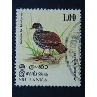 Шри - Ланка.  Птицы.