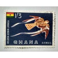 Гана.фауна