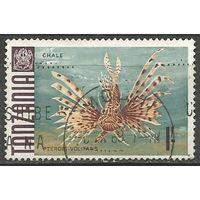 Танзания. Рыба-зебра. 1967г. Mi#28.