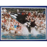 Дельфинариум 1989