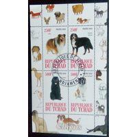 Чад 2010 Собаки