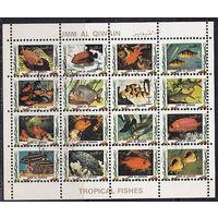 Тропические рыбки. МЛ, беззубцовка