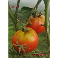 Семена томата Оксхарт (Oxheart)