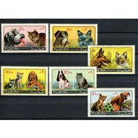 Фуджейра - 1971 - Коты и собаки - [Mi. 798-803] - полная серия - 6 марок. MNH.