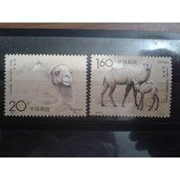 Китай 1993 верблюды полная серия