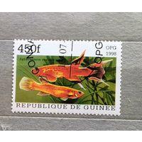 Гвинея.1998г.Рыбы.