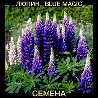 Семена Люпин Blue magic