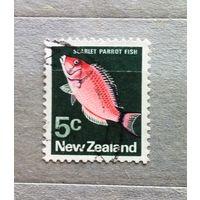 Новая Зеландия.Рыбы.