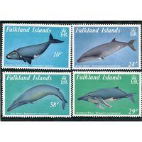Фолклендские острова. Киты
