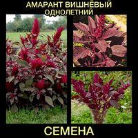 Семена Амаранта вишнёвого
