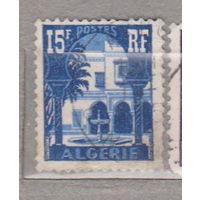 Французские колонии архитектура флора пальмы Алжир 1954-1955 год лот 1012