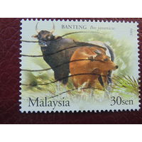 Малайзия 2004г. Фауна