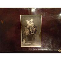 Почтовая карточка Котенок, 1956 год, тираж всего 20тыс