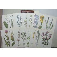 Лекарственные растения, 32 шт открытки