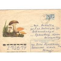 Конверт СССР прошедший почту, 1975 Подберезовик (флора)