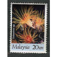 Кораллы. Малайзия. 1997. Чистая