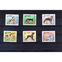 Собаки ГДР 6 шт
