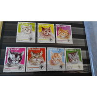 Кошки марки фауна Парагвай