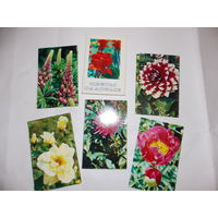 Комплект открыток СССР Цветы садовые