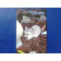 Коста Рика 2004 фауна