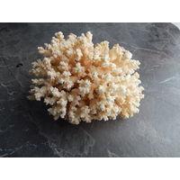 Куст коралла, ширина 24см., высота 15см.