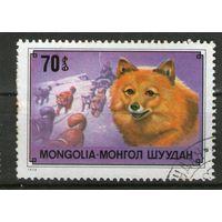 Монголия. Гашеная. Лот-1