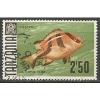 Танзания. Рыбы. Трёхполосый луциан. 1967г. Mi#31.