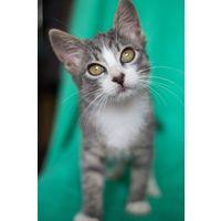 Мышка красивая котенок девочка в дар