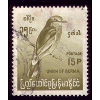 1 марка 1968 год Бирма Птичка 203