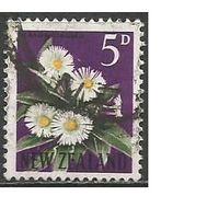 Новая Зеландия. Цветы. Целмизия. 1960г. Mi#398.