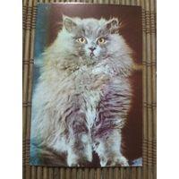 Карманный календарик . Котик. 1986 год