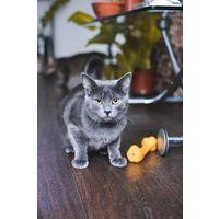 Котенок Талер нуждается в любящей семье