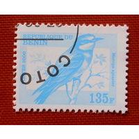 Бенин. Птицы ( 1 марка ) 2000 года.
