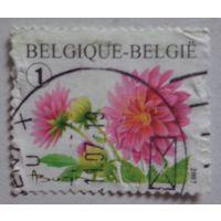 Бельгия.2007.цветы