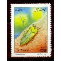 Алжир фауна насекомое