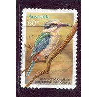 Австралия. Альциона краснополосная,