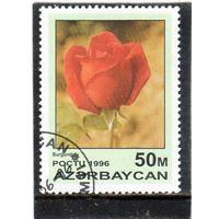 Азербайджан.  Mi:AZ 320. Бургундия Серия: Розы. 1996.