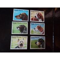 Гвинея-Бисау, собаки