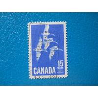 Канада. 1963 г. Мi-357. Канадские казарки.