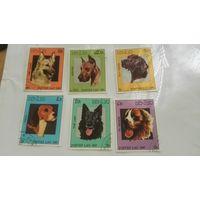 Лаос, собаки, фауна, распродажа