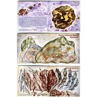 КАМЕНЬ В ИСТОРИИ ЗЕМЛИ Коллекция в трех буклетах