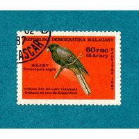 Мадагаскар-1987-Птицы находящиеся под угрозой исчезновения.Попугай- Черный коракопсис