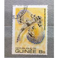 Гвинея.Рыбы.