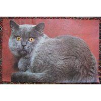 Плакат постер Удивлённый кот, СССР .